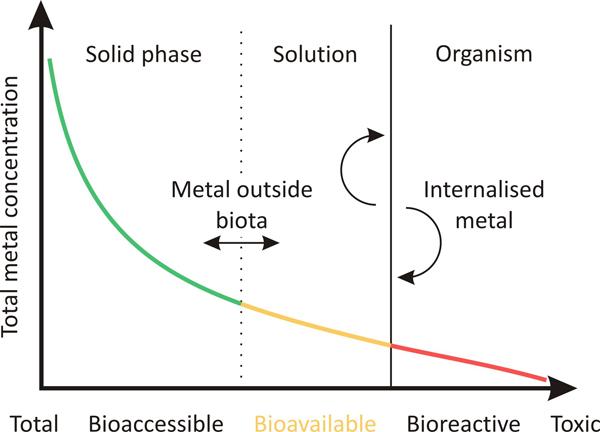 bioaccessibility-&-bioavailability